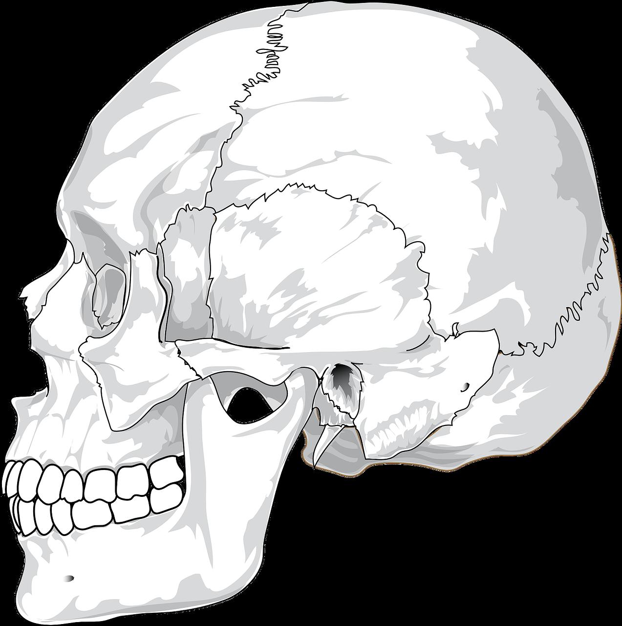 skull-31060_1280 (1)
