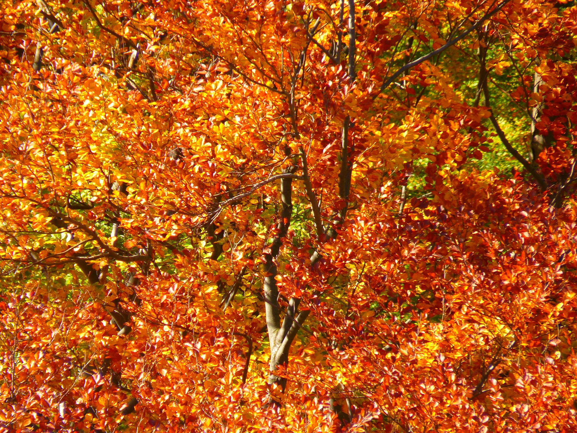 forest-63279_1920